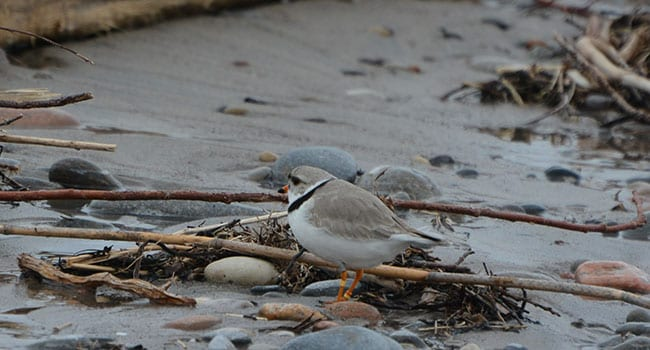 Buckets of rain put wildlife in peril